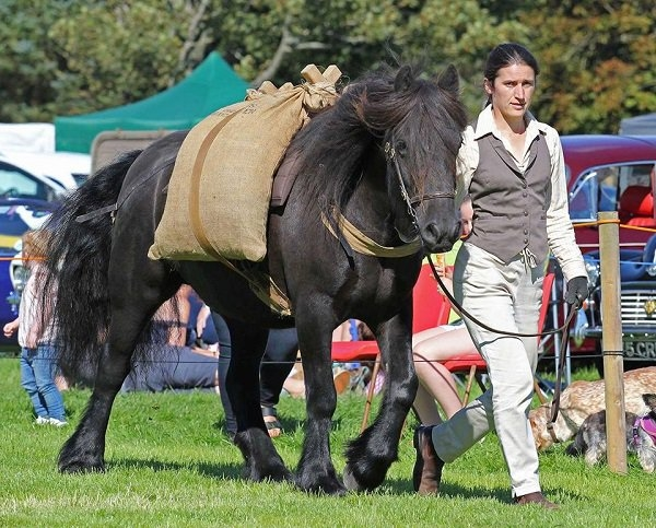Skelton Show… celebrating the 125th show throughout the years